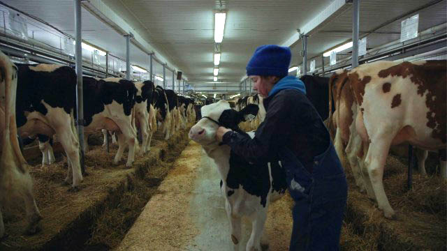 Le plancher des vaches.pct